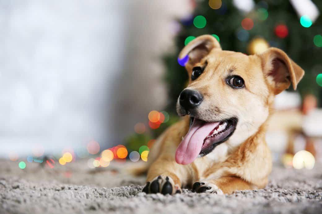 silvestr a uklidnění psa